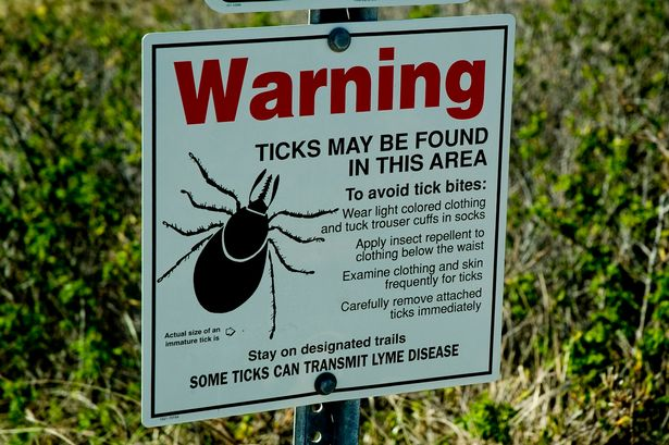 Warning-over-lyme-disease-threat-as-plague-of-ticks-expected-to-swarm-into-Britain-this-summer